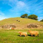 Régimen especial de agricultura, ganadería y pesca